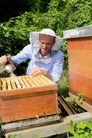industriousness: beekeeper at work with smoker