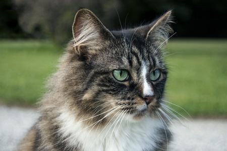 Cat Stock fotó - 30483677