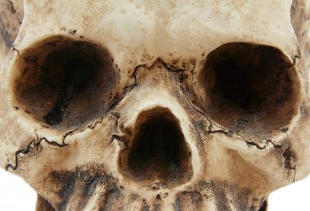 Skull isolated on  white background Stock Photo - 18418956