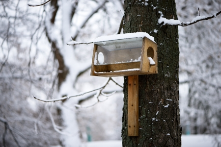 Nesting box under snow during the winter photo