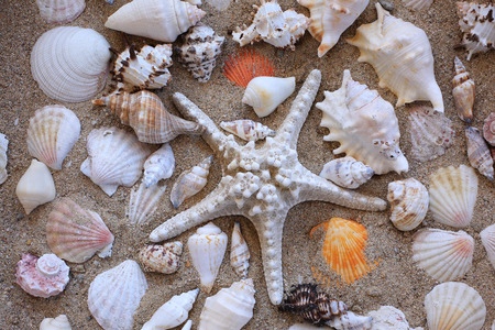 Some sea shells and star fish in a sand table Zdjęcie Seryjne