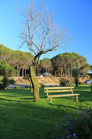 Eine leere Holzbank Bank neben einem Baum in einem Park Standard-Bild - 63039976
