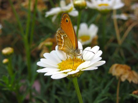 Ein Schmetterling, der auf einer Blume in einem Garten stillsteht Standard-Bild - 63039980