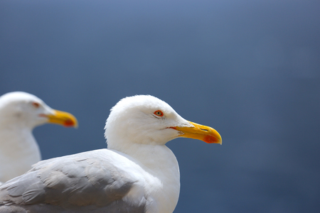 two seagulls resting on the edge of a wall in Bonifacio, France