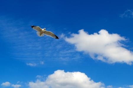 Heavenly Seagull photo