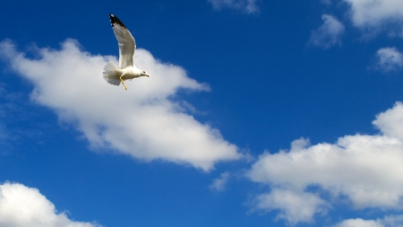 Seagull Flying Against a Beautiful Blue Sky photo