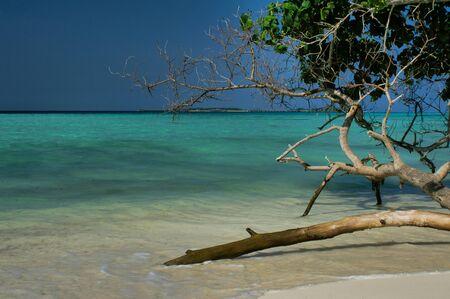 Trees On Maafushi Island Maldives. Picnic, Summer.