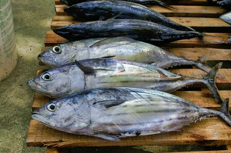 Bigeye Tunas On The Wood Palette On The Fish Market On Maafushi Island Maldives