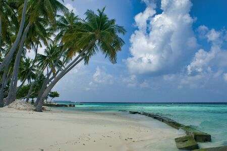 Palm Trees On Maafushi Island Maldives 写真素材
