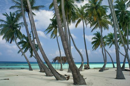 Palm Trees And Shack On Maafushi Island Maldives.