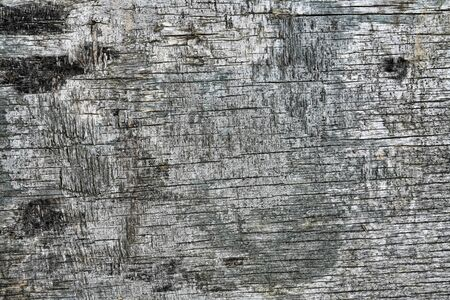 A black bark of a tree texture. Old vintage board texture.