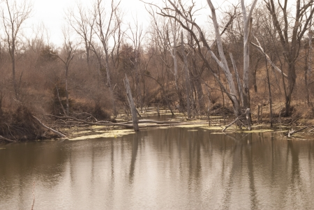 dreary: early spring pond