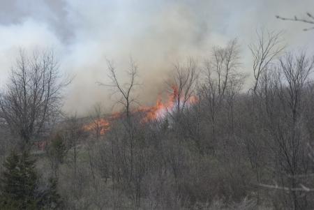 Brush Fire Zdjęcie Seryjne