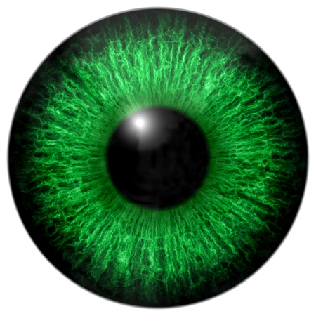 Texture with green eye, black fringe and white background