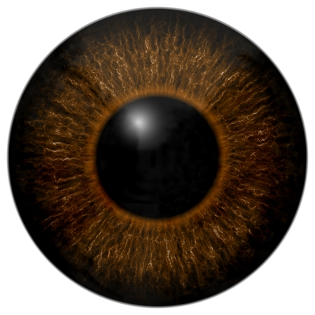 Brown 3d eye texture with black fringe and white background Stock Photo