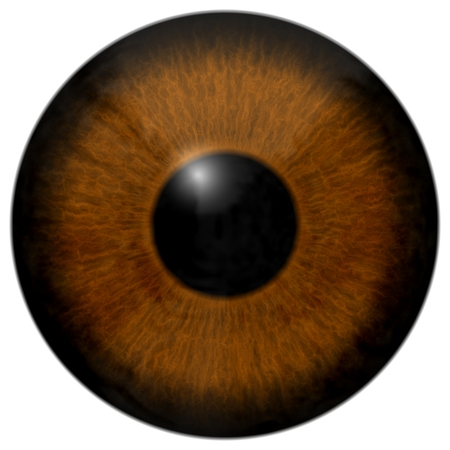 Textura de ojo marrón 3d con franja negra y fondo blanco.