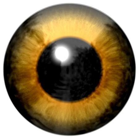 Frog eye 3d texture, animal eye brown color
