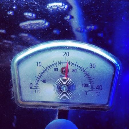 Water temperature in a fish tank 版權商用圖片