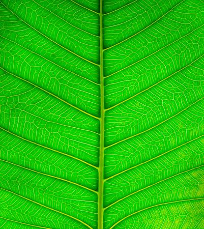 illustration: Green leaf texture illustration Stock Photo