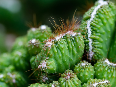 selective focus on green cactus with blur background
