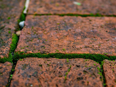 selective focus green moss in the seam of brick street