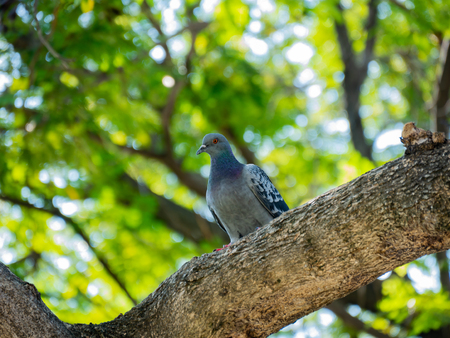 Pigeon perching on a tree with blur green background Reklamní fotografie