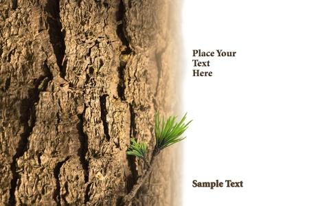 background tree bark as rough texture Stock Photo