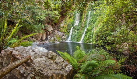 tropical forest stream pond and waterfall with rich foliage and dark water Stock Photo - 16685408