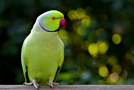 kakariki parakeet perched on a beam with mottled green background