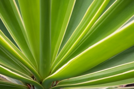 detail of the green leaves of a succulent plant Stock Photo