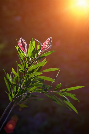new growth reaching for light, flower and leaves