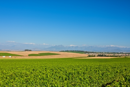 landscape view over orchard of grape vines with mountain and sky background
