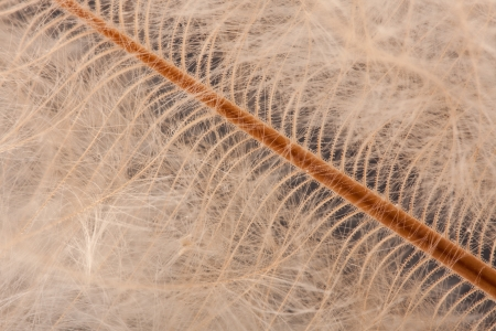 macro detail of a birds down feather showing small barb hooks Stock Photo