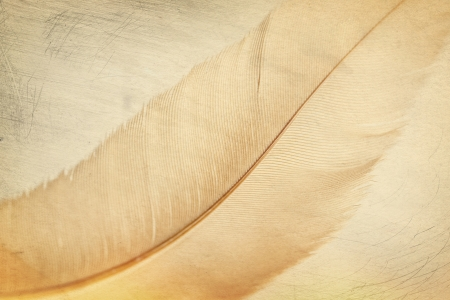 textured background detail of a birds feather, close up  Stock Photo