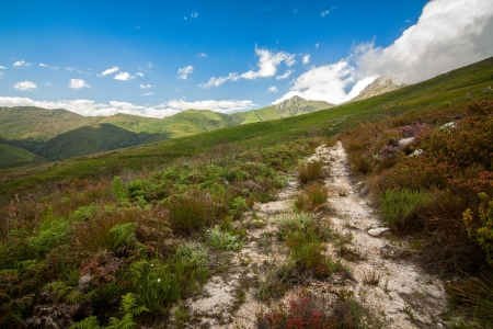 mountain view with pathway and natural colourful fynbos plant species Stock Photo
