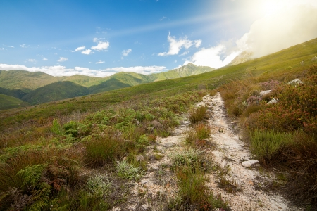 mountain path in sunshine with natural colourful fynbos plant species Stock Photo