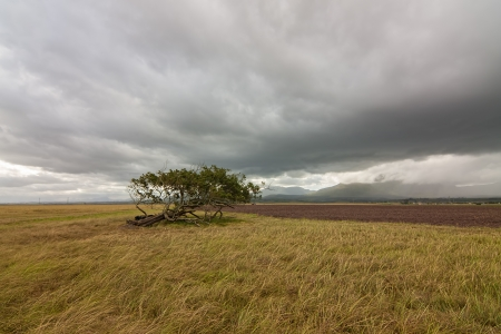 wind swept tree in a farmland field with dramatic stormy clouded sky Stock Photo