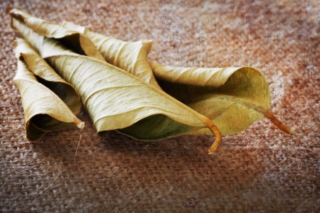 abstract background of a dry leaf on hessian cloth with rough textures and softness