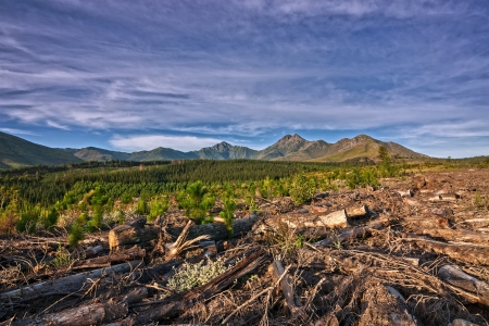 mountain view over plantation of felled pine trees natural vegetation and new growth Stock Photo