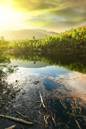 sereen forest lake with stagnant water containing dead wood and scum with brilliant yellow sunset Stock Photo - 19431117