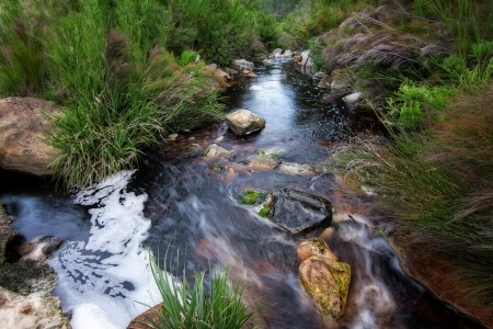 mountain stream with flowing water and natural vegetation