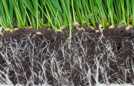 roots Stock Photo - 2989257