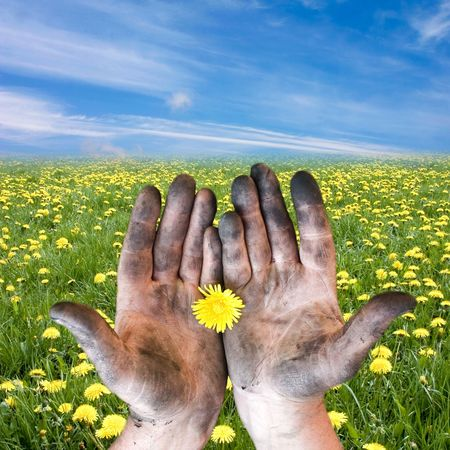 hands with the flower on the background of meadow