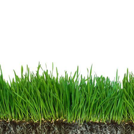raices de plantas: ra�ces aisladas