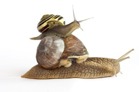 snail on a white background Stock Photo