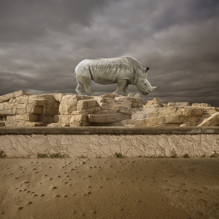 lonely rhino on the rock in the desert