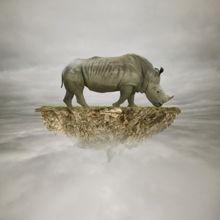 aerial animal: rhino on the rock in the sky