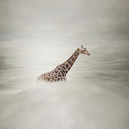 giraffe in the sky Stock Photo