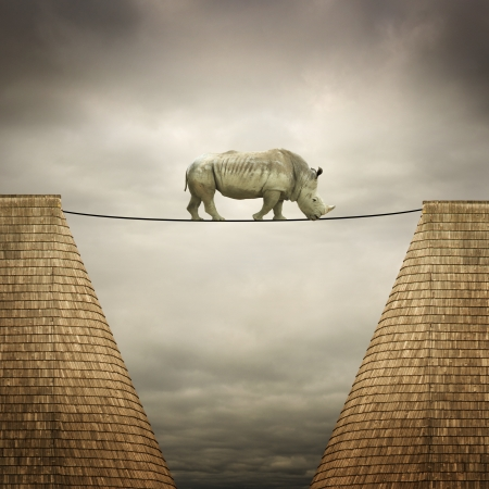 rhino balanced on the line photo
