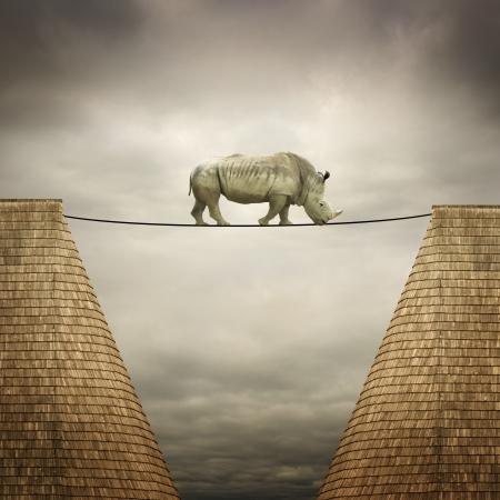 rhino balanced on the line